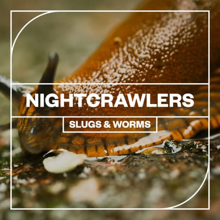 Nightcrawlers: Slugs and Worms - Samples & Loops - Splice